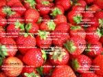 food_14.jpg